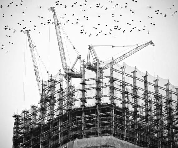 Building site with birds and cranes